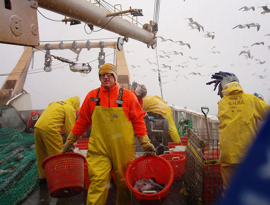 National Oceanic and Atmospheric Administration fisheries scientist Jon Hare carried baskets of fish during the 2006 winter trawl survey along the Northeast continental shelf. This annual survey started in the 1960s and has been instrumental in documenting changes in fish distributions. (NOAA)