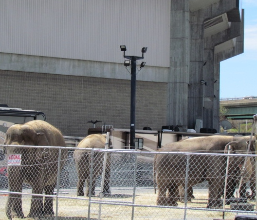 Ringling Bros. will stop using elephants for good after three shows in Providence. (Tim Faulkner/ecoRI News)