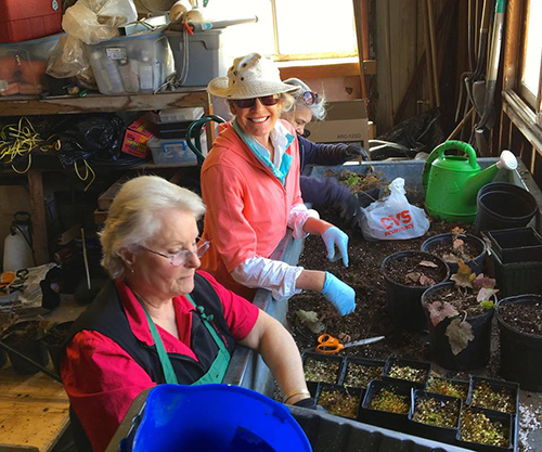 Many of the herbaceous flowers that are sold at the Rhode Island Wild Plant Society's annual plant sale are started from seed by a group of about 20 gardeners. (RIWPS)