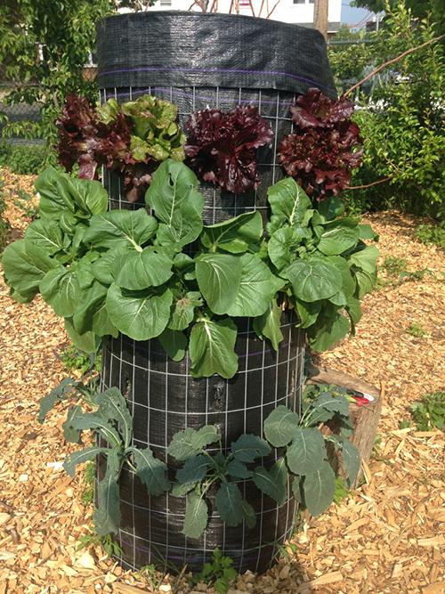Wondrous Vertical Gardening In The Urban Environment Ecori News Short Links Chair Design For Home Short Linksinfo