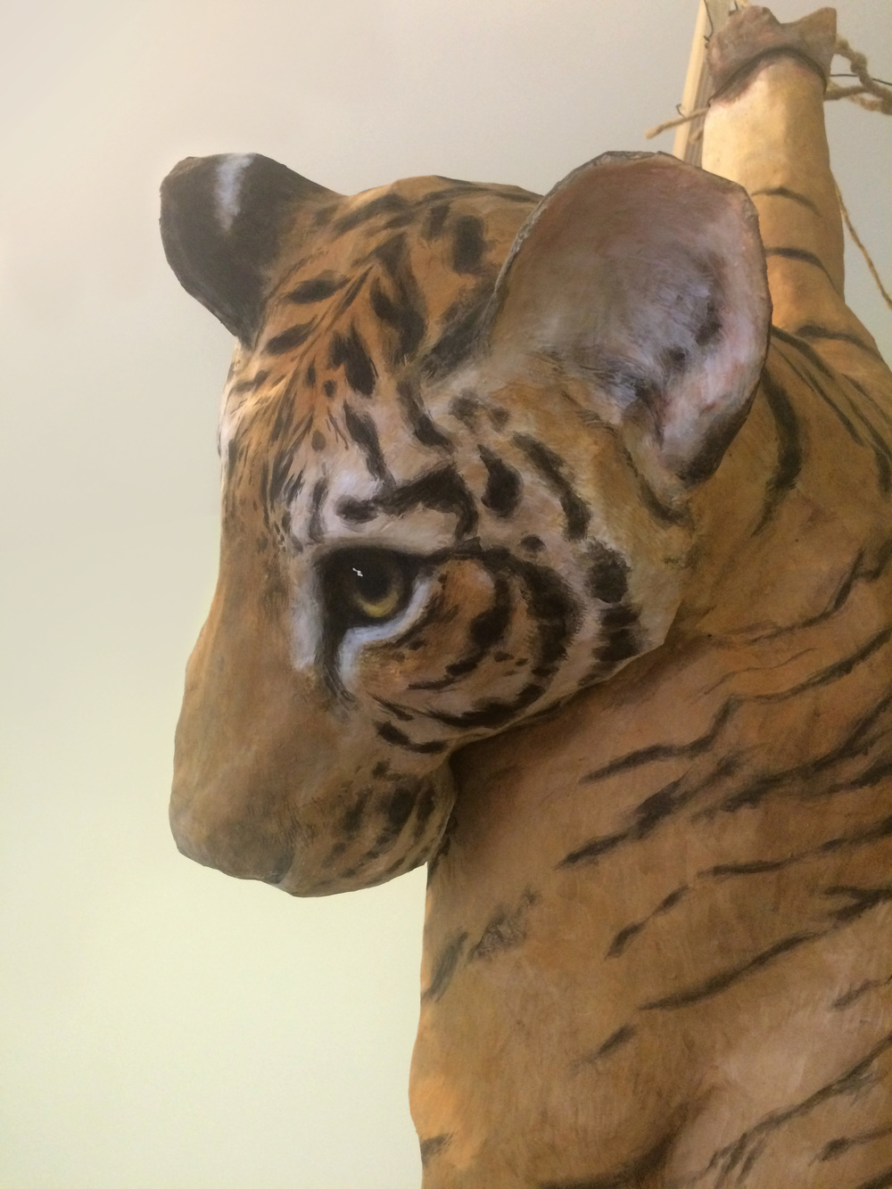 Tigers are hunted as trophies and kept as pets by people around the world.  This piece, depicting an ensnared, juvenile tiger, is intended to address directly the poaching of wild tigers and indirectly the exploitation of captive tigers and the trade in tiger parts.   (Emily Schnall sculpture)
