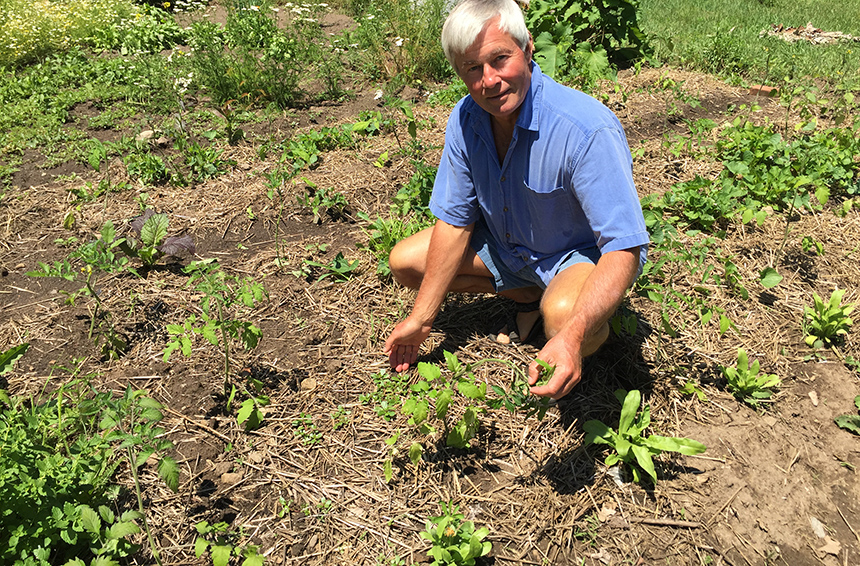Brett Mayette says eating weeds can transform our health, brighten our eating experiences and upend the industrial food system. (Judee Burr/ecoRI News)