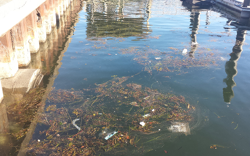The last big rain event in Newport, R.I., in late May, left behind this mess in Newport Harbor. This is the type of condition the Marina Trash Skimmers, installed in early August, will help clean. (Clean Ocean Access)