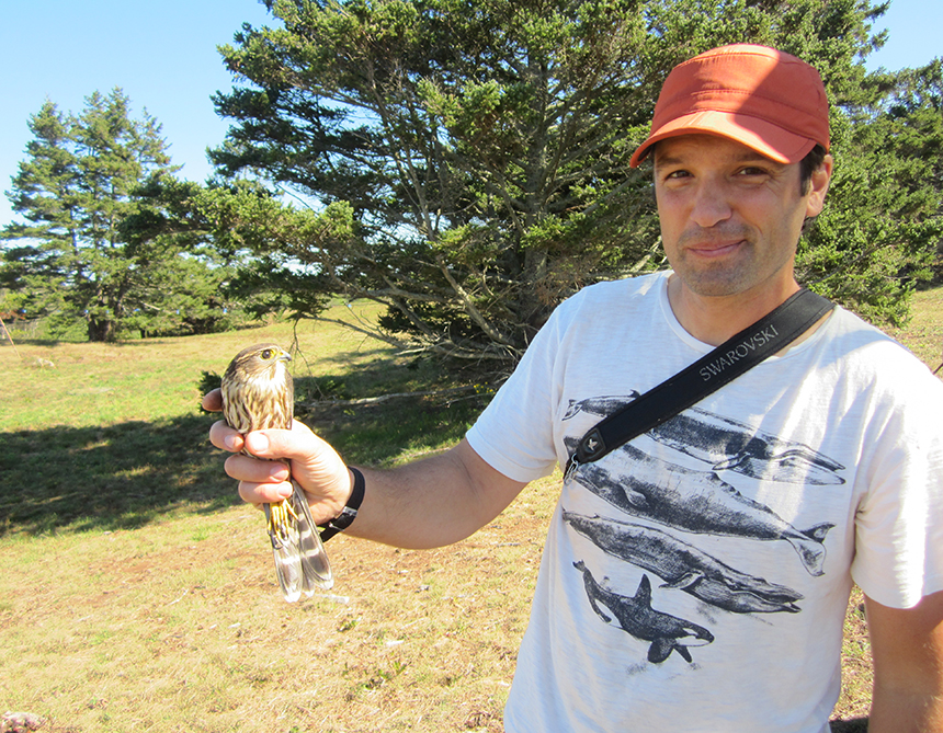 Rick Gray holding a merlin, one of the falcons he captured on Block Island for his study of falcon migration. (Todd McLeish/ecoRI News)