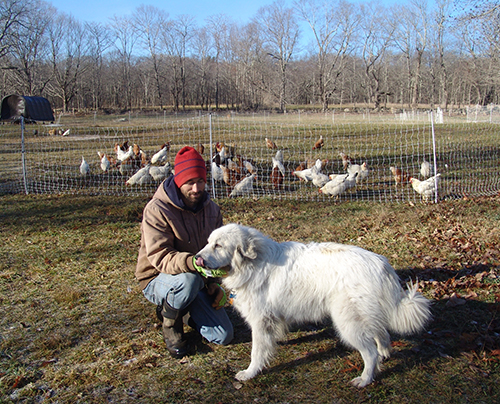 Romeo isn't licking his chops because there are some 100 laying hens in his backyard. The Great Pyrenees is actually their guardian, despite his playful personality.