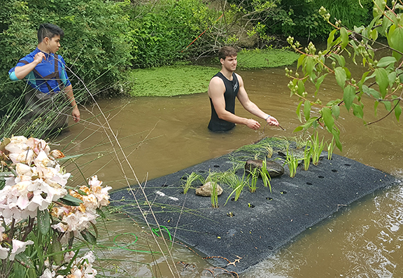 URI students Ricardo Verissimo and Ehren Messinger install a floating wetland at a pond in Kingston, R.I., to test its effectiveness at removing pollutants. (Soni Pradhanang/URI)