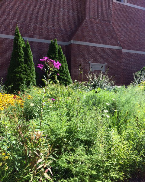 The school's gardens are filled with native plants.