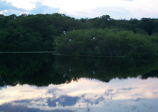 Egrets at dusk at Gray's Mill Pond in the village Adamsville. (Abigail Brooks)