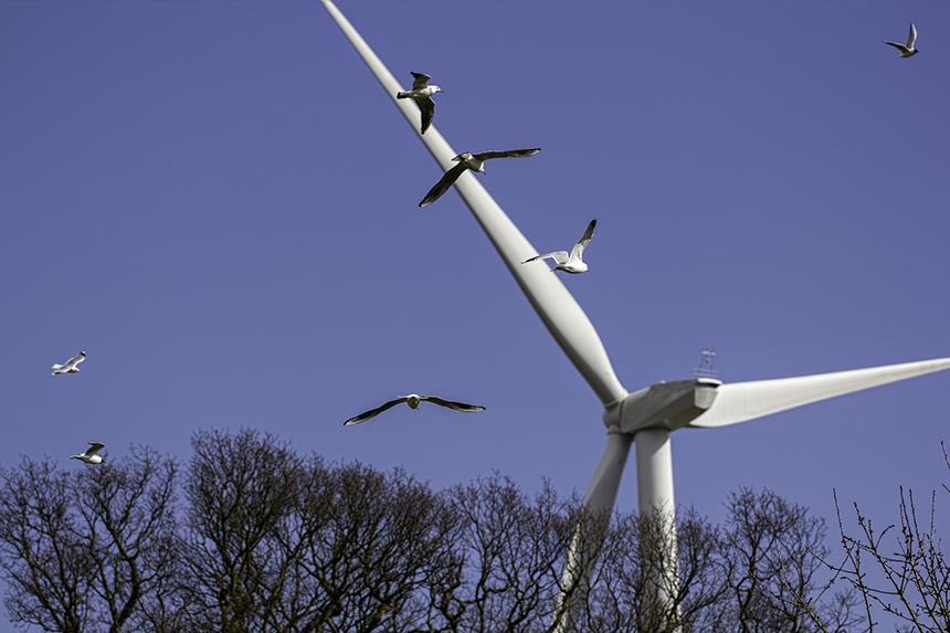 Wind turbines are often blamed for killing birds, but this renewable energy is hardly the only power source that is deadly to wildlife. (istock)