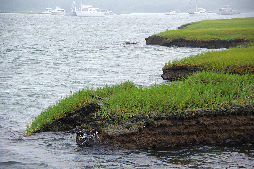 Salt marshes are highly productive ecosystems that filter out pollution, provide habitat for wildlife and protect homes from flooding. They're also sensitive to development. (Christopher Neill/Woods Hole Research Center)