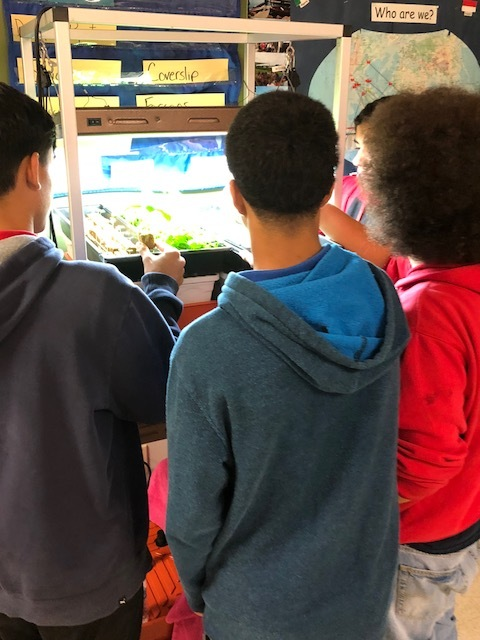Students are learning English and studying hydroponics.