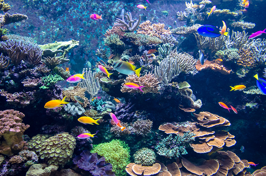Cyanide is still believed to be widespread as a capture method in the Philippines and Indonesia for aquarium fish. (istock)