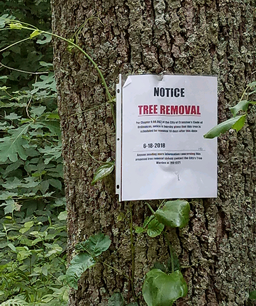 Last month National Grid started marking trees for removal for the interconnection of two solar projects. (Mike Coutu)