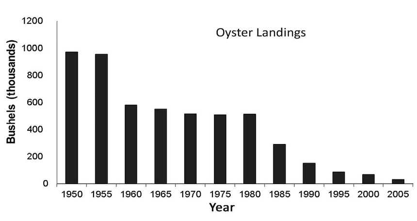 This graph shows oyster landings from Connecticut, New Jersey, Delaware, and Maryland-Virginia from 1950 to 2005. (Clyde Mackenzie)
