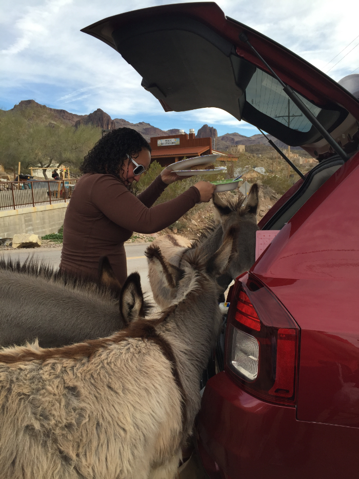Wild Oatman burros looking for a handout.