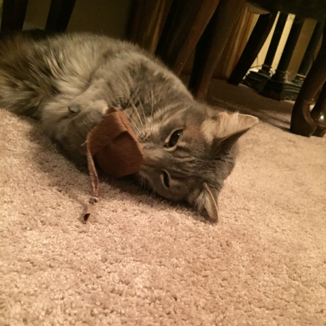 Scrap Buster – A Purr-fect Cat Toy