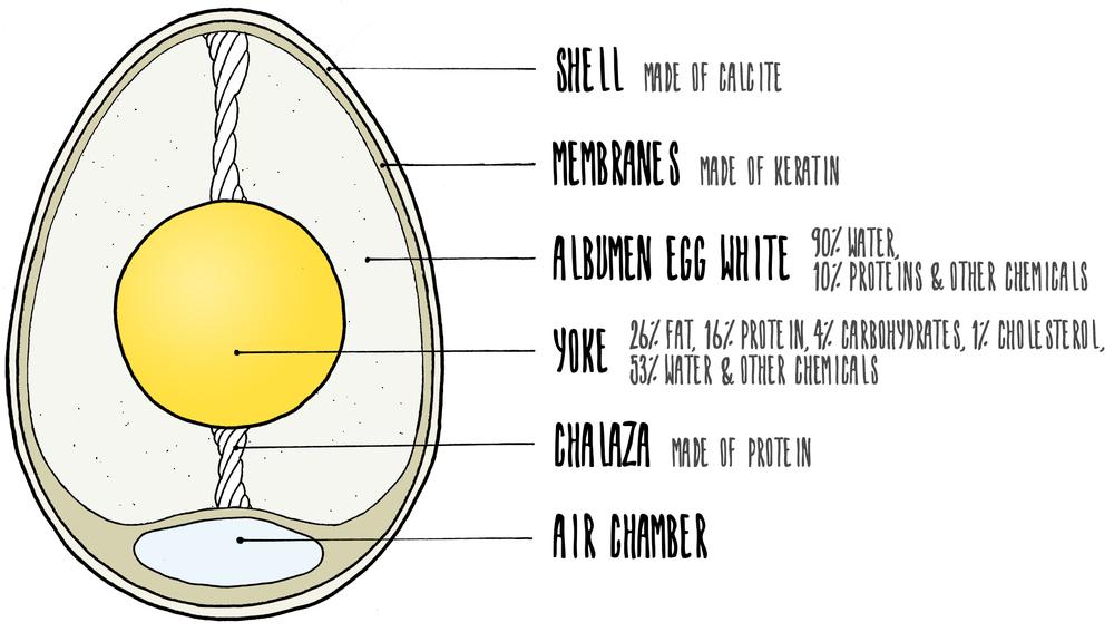 eggWEB.jpg