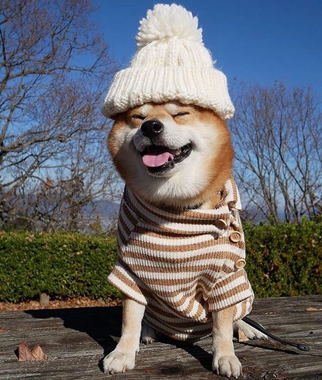 Winter ready. ❄️ #FindYourZen (📷: @shibainu.berry)