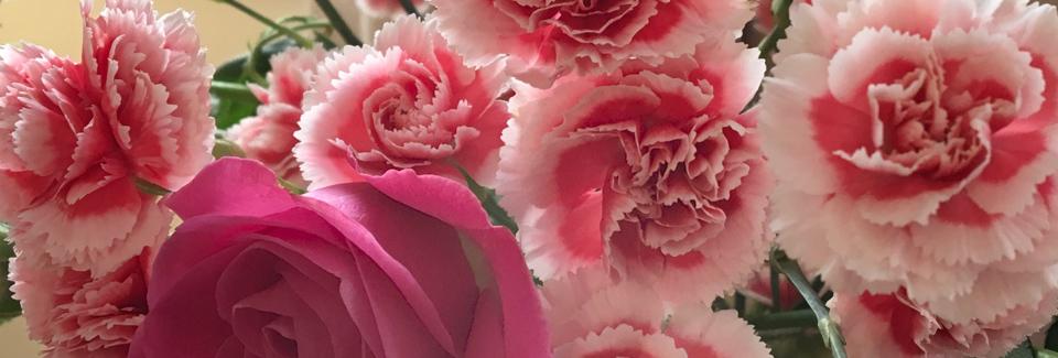 Beautiful Pink Carnations.jpg
