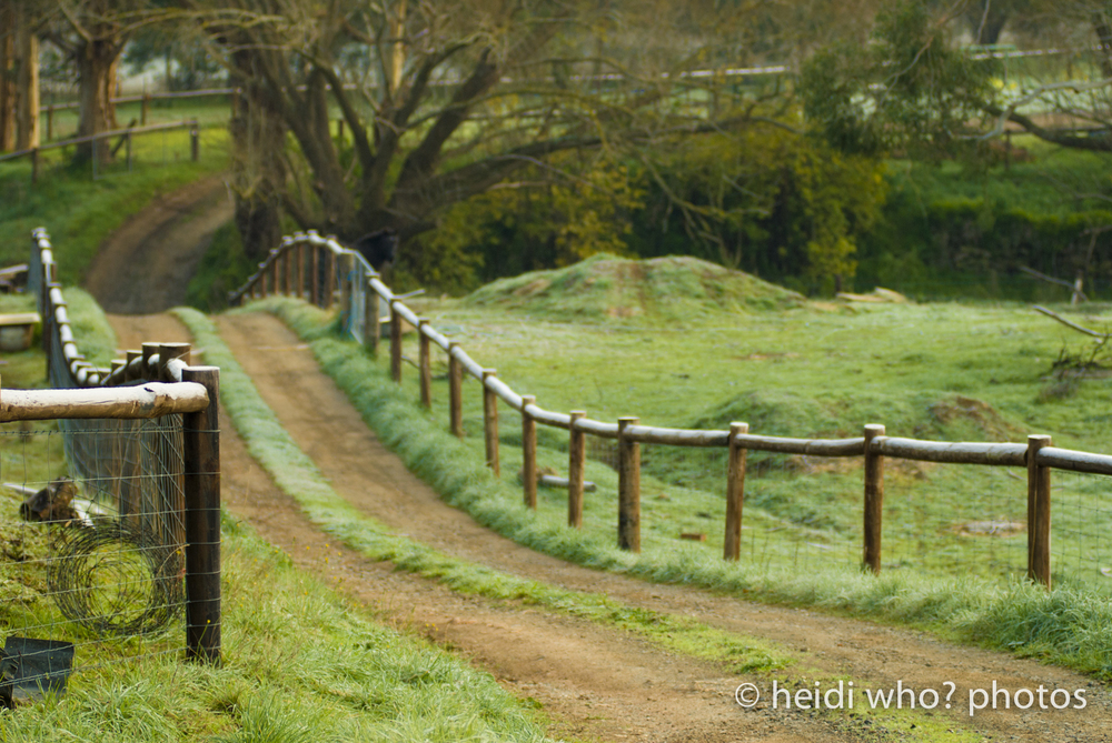 Farm driveway near Strathalbyn, South Australia