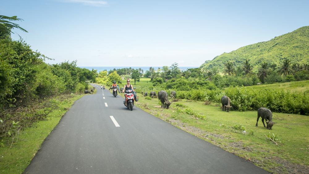 Lombok countryside