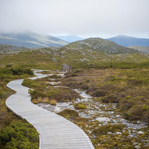 Hiking luxury, the boardwalks.