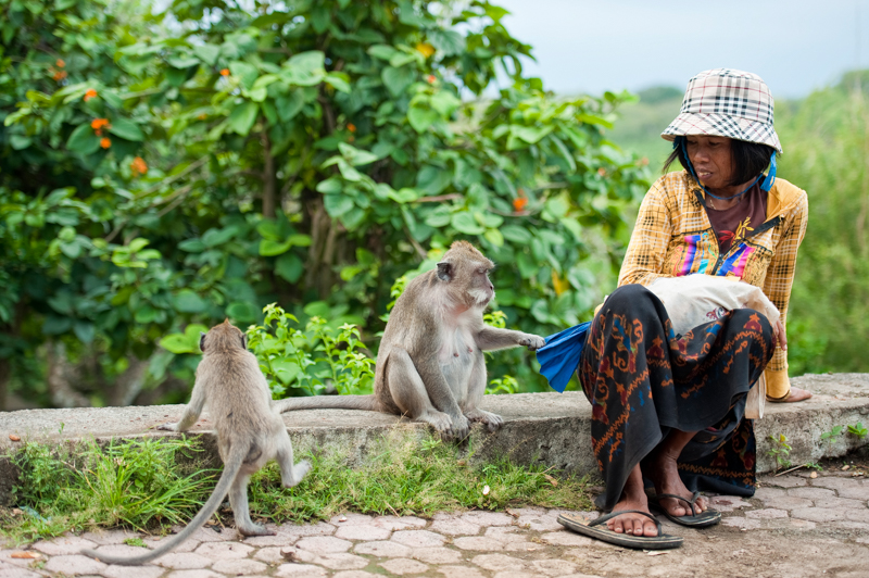 At Uluwatu temple the monkeys run wild. This lady had fun feeding them, and obviously they knew her. I did ask for a photo but didn't want her looking at the camera - I wanted the interaction.