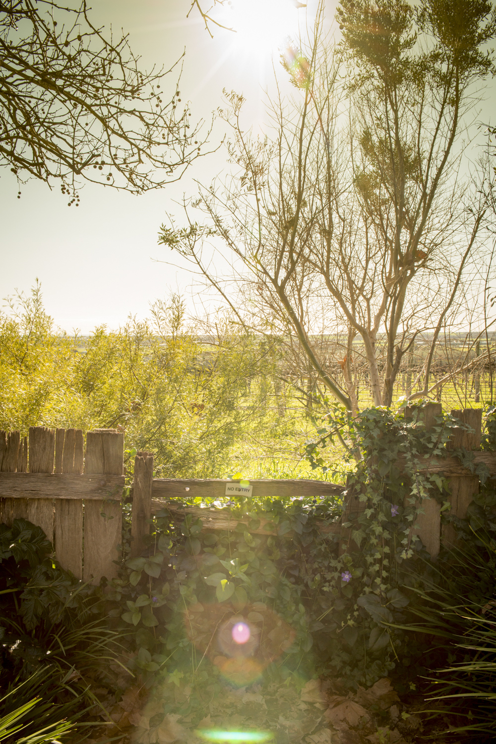 Sun flare and shooting into the sun. Sometimes it works. The sun flares in this image makes it softer and dreamier. It was taken at a cottage in the middle of vineyards - romantic, relaxing and surrounded by nature.