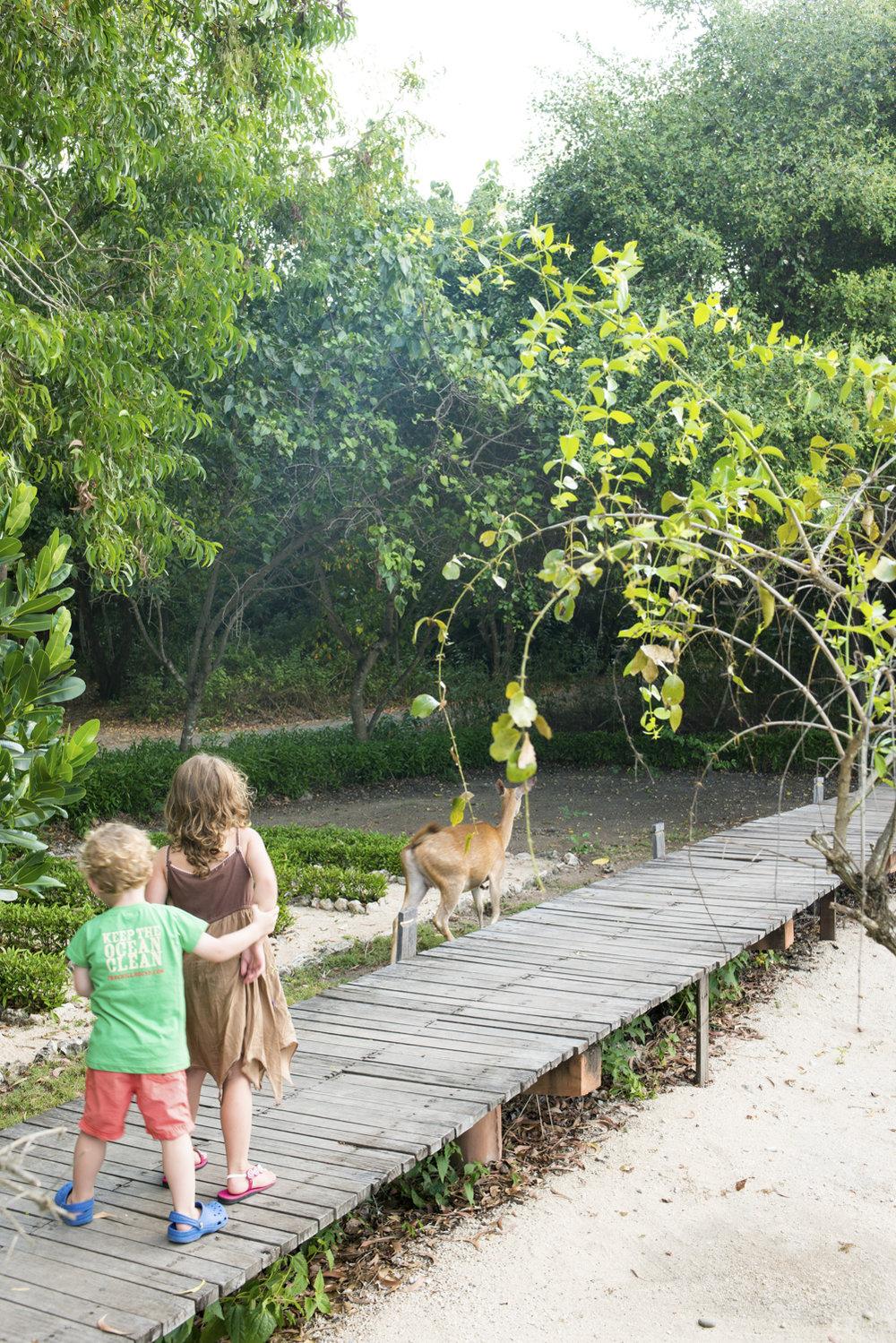 Exploring Menjangan mangroves.