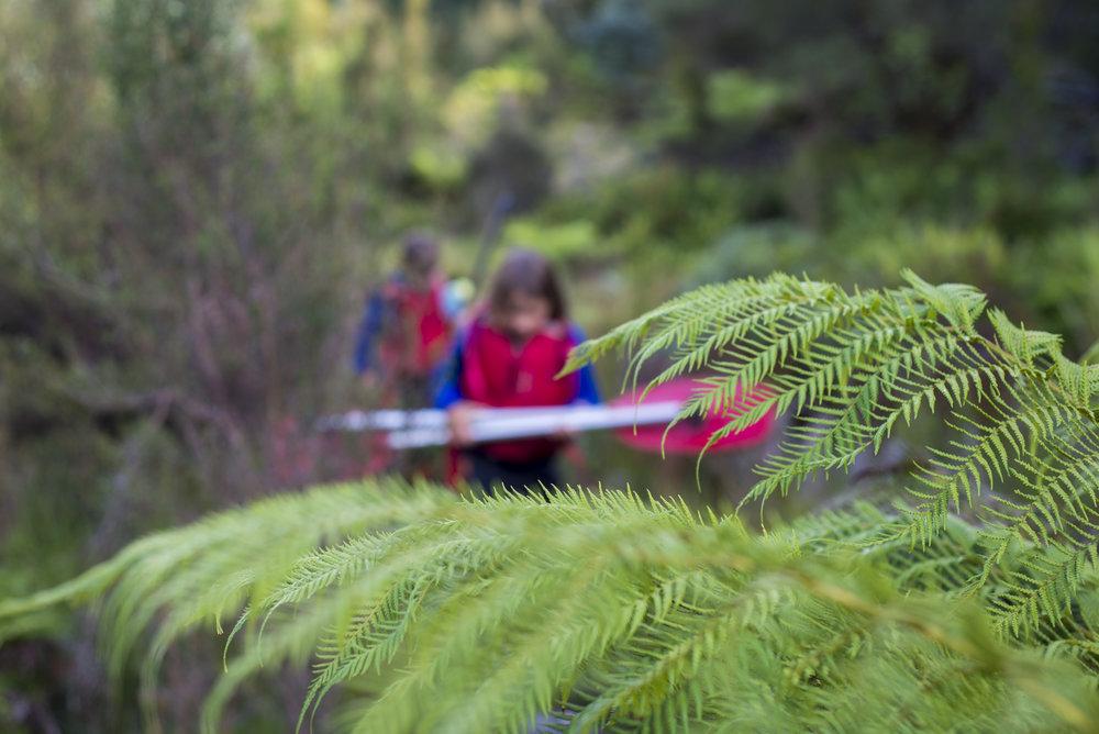 Tasmania0317-33.jpg