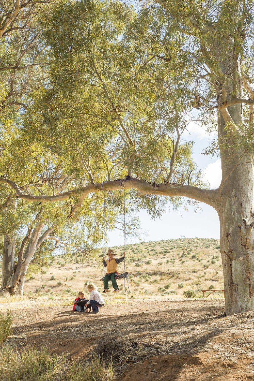 FlindersRanges011116-365.jpg
