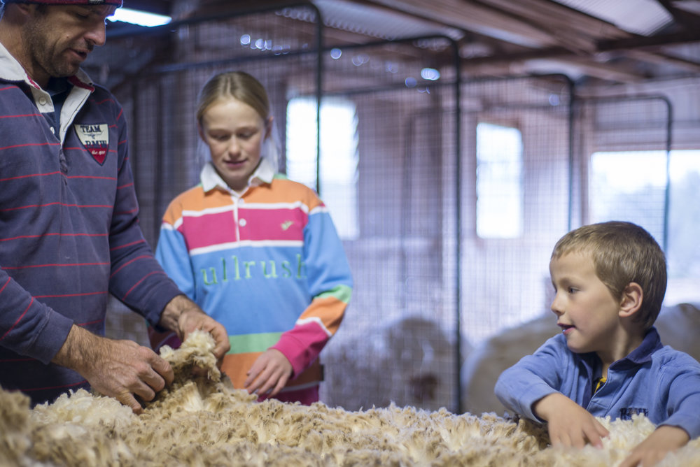 Getting hands on and learning in the shearing shed
