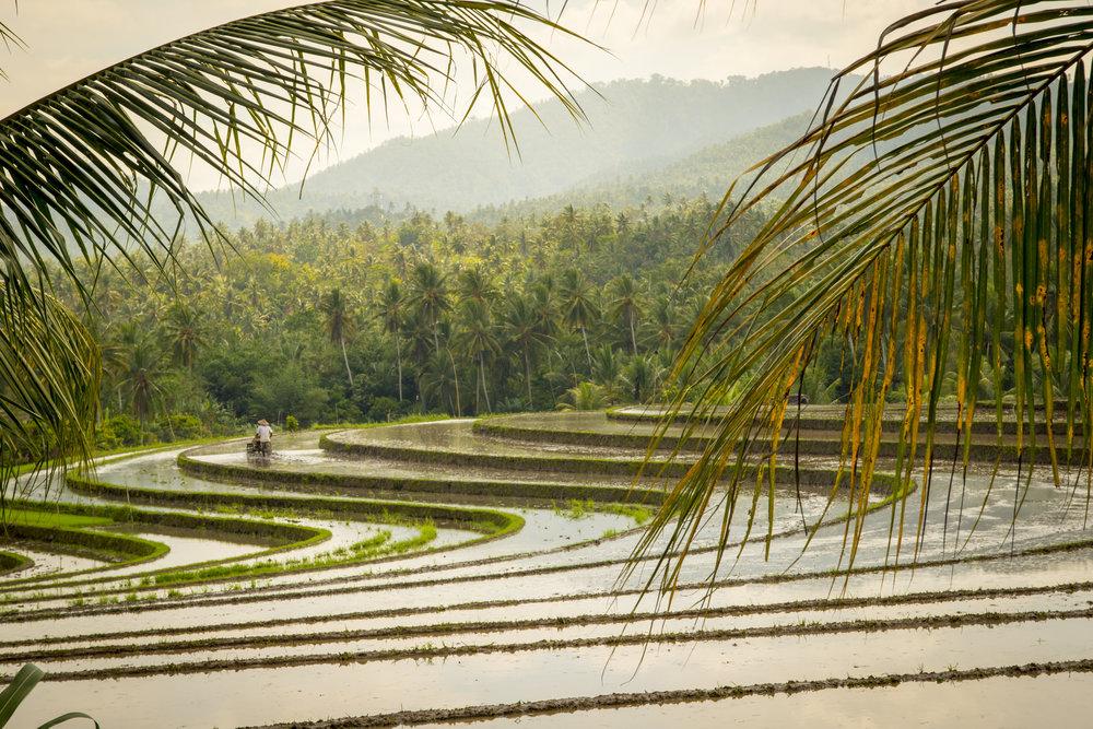 Bali0514-0362.jpg