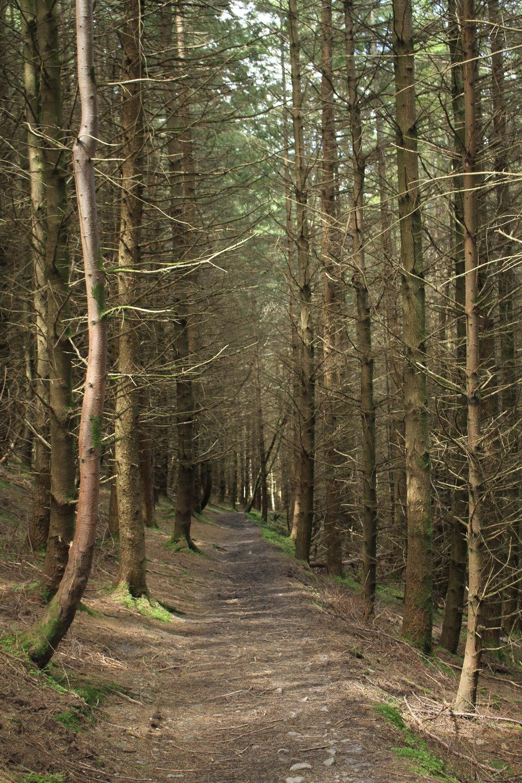 Trish Kane NatureForest Walk.JPG