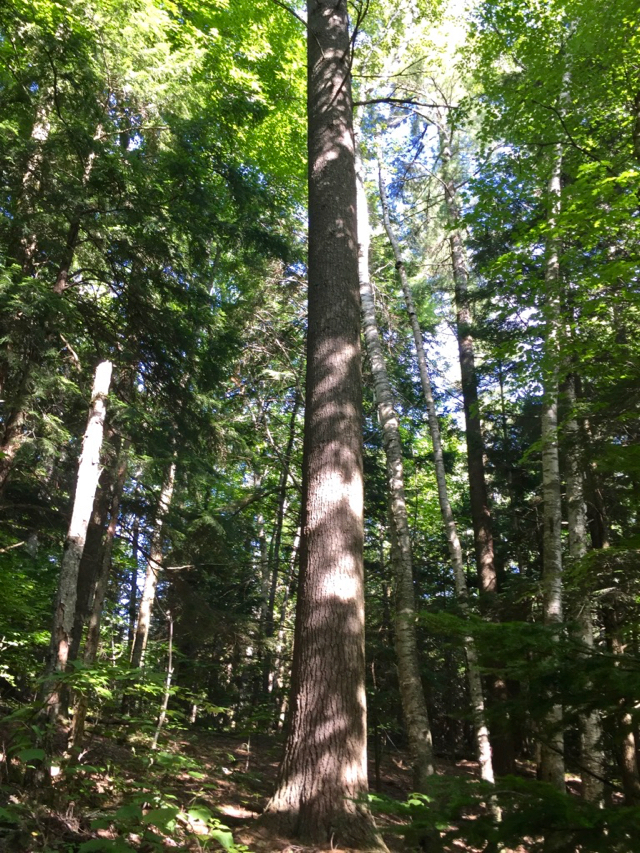 Post Tree 2.jpg