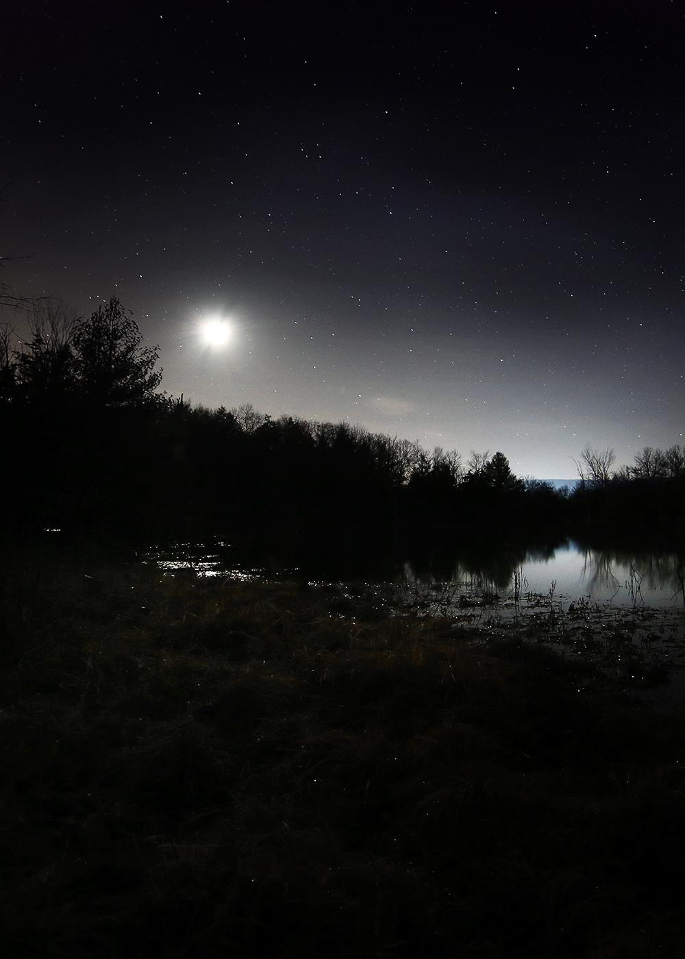 Woodland Pond, 2014