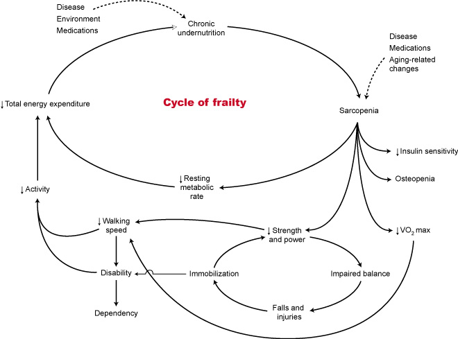 (Fig. 1) The Cycle of Frailty  ²