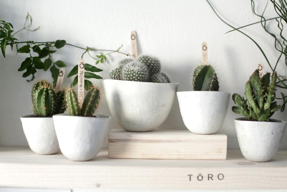 Toro Plant Shop Logo