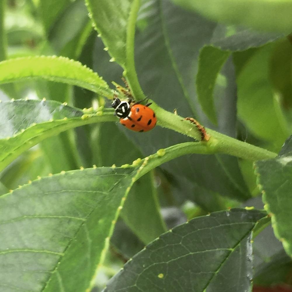 Ladybug help.
