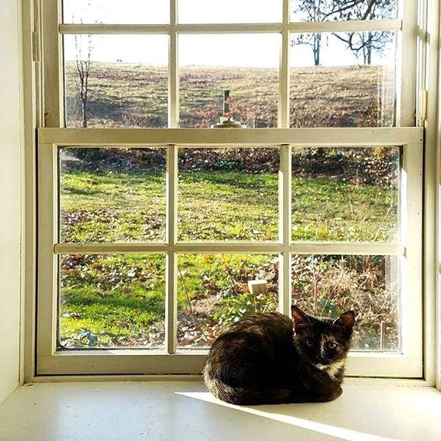 Kitten with landscape background..#warwickfarm #catsofwarwick #countrylivingmag