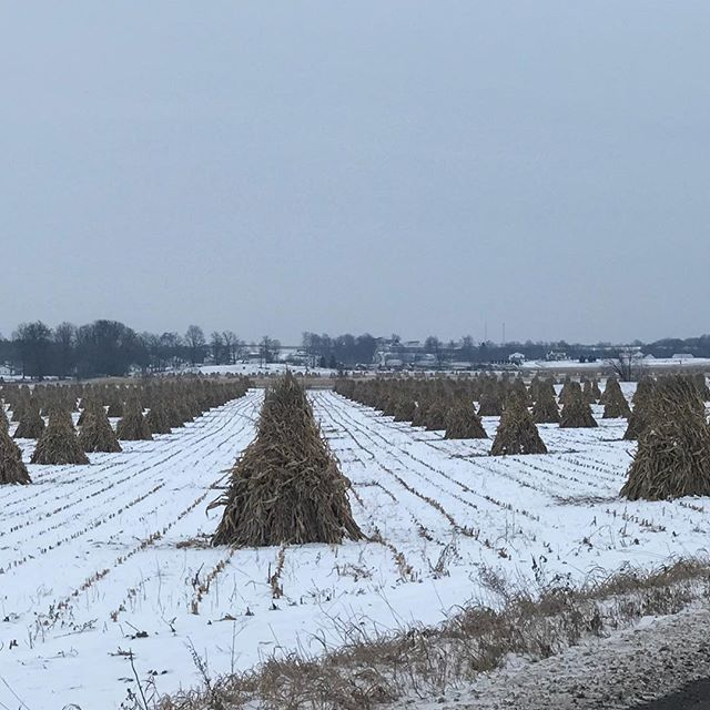 Corn teepee sculptures on a white canvas..morning drab turned into a almost spring day! #ohioamishcountry #asseeninohio #ohiobackroads
