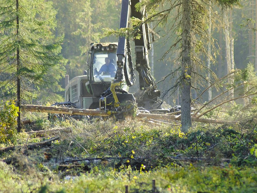 Forestry2.jpg