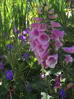 IA flowers1.jpg
