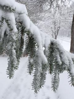 A snowy spring walk