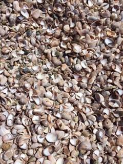 Seashells by the seashore...