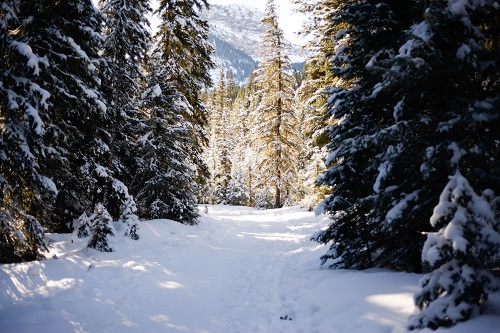 Whether or not there is snow in your neighborhood, wear your Snowy Walk cowl wherever you are and dream of a winter wonderland.  Photo: Gallatin National Forest, south of Bozeman, MT.