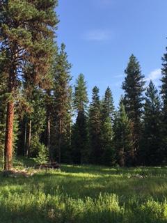 A summer mountain meadow in McCall, Idaho
