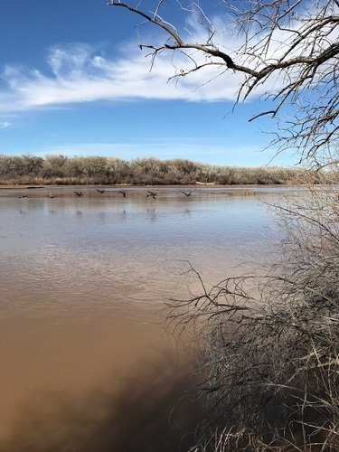 Along the Rio Grande River on the Aldo Leopold River Loop Trail.