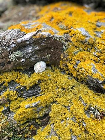 and the lichen…