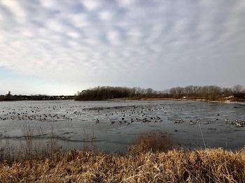 fall geese_350.jpg